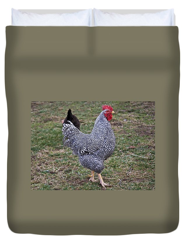 Rooster Duvet Cover featuring the photograph Rooster Strutting by Douglas Barnett