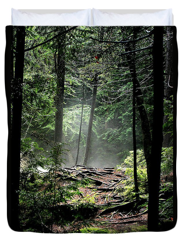 Woods Duvet Cover featuring the photograph Roots by Greg Fortier