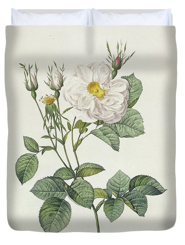 Rosa Duvet Cover featuring the drawing Rosa Alba Foliacea by Pierre Joseph Redoute