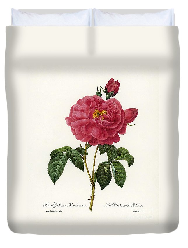 1833 Duvet Cover featuring the photograph Rosa Gallica by Granger