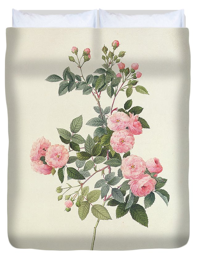 Rosa Duvet Cover featuring the drawing Rosa Multiflora Carnea by Pierre Joseph Redoute