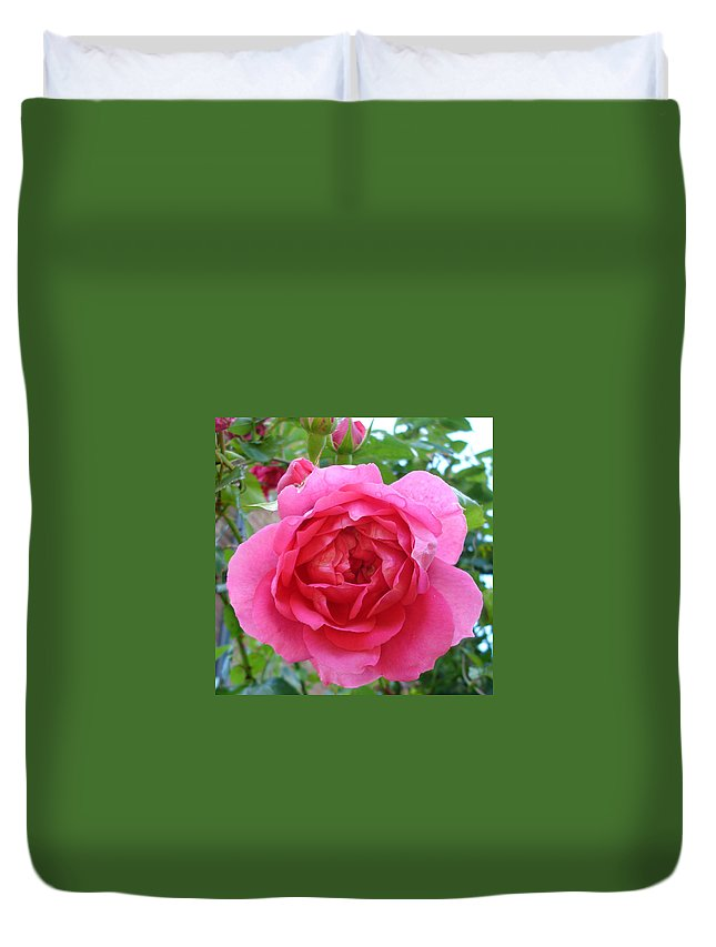 Rose Duvet Cover featuring the photograph Rosa Zephrine by Susan Baker