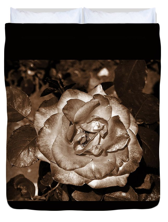Ordinary Rose Duvet Cover featuring the photograph Rose In Iron Light by Vineta Marinovic