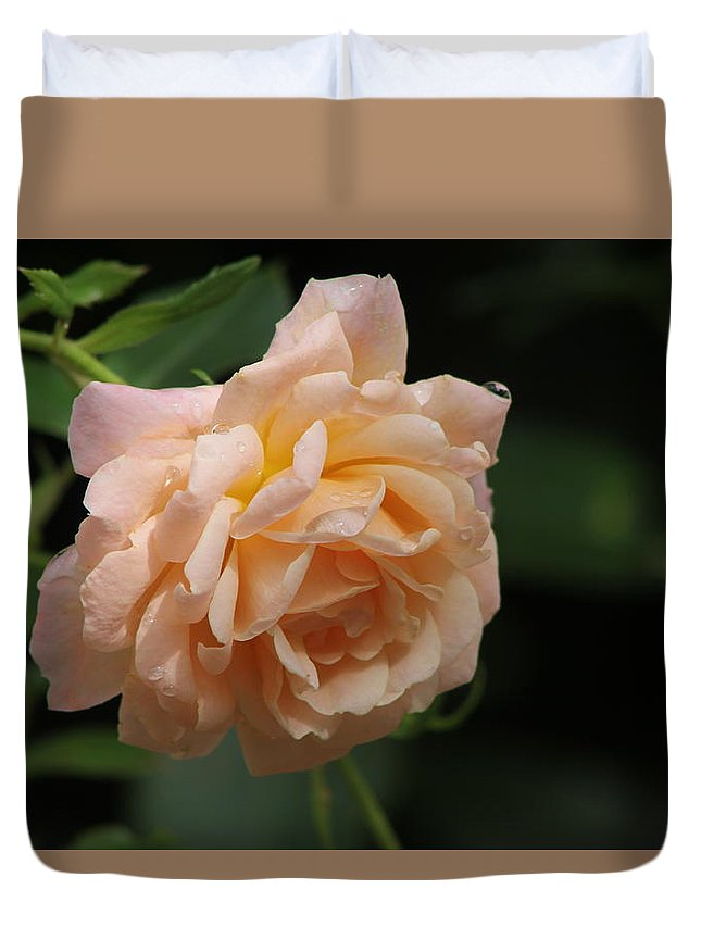 Rose Duvet Cover featuring the photograph Rose by Kyle Hillman