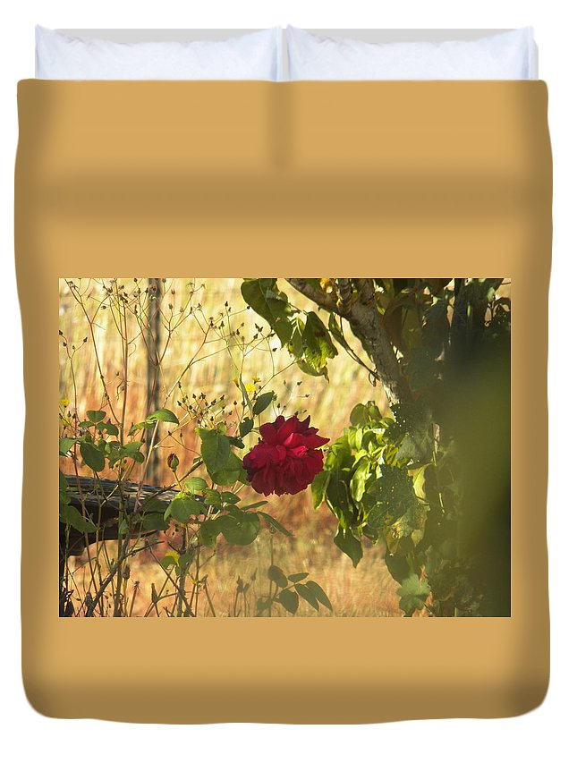 Rose Duvet Cover featuring the photograph Rose by Laurie Kidd