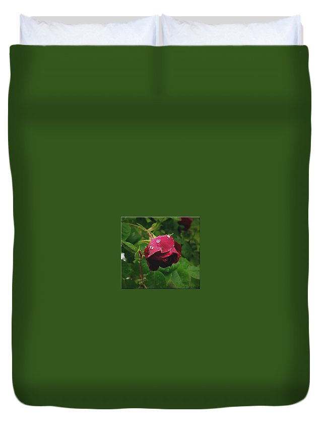 2d Duvet Cover featuring the photograph Rose On The Vine by Brian Wallace