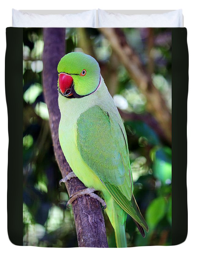 Rose-ringed Parakeet Duvet Cover featuring the photograph Rose-ringed Parakeet by Jennifer Robin
