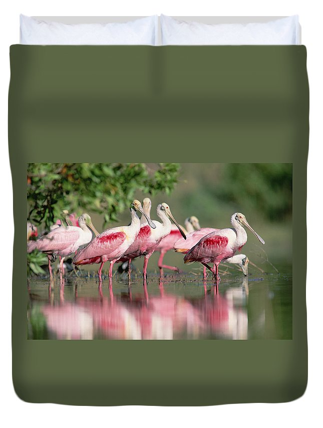 00171421 Duvet Cover featuring the photograph Roseate Spoonbill Flock Wading In Pond by Tim Fitzharris