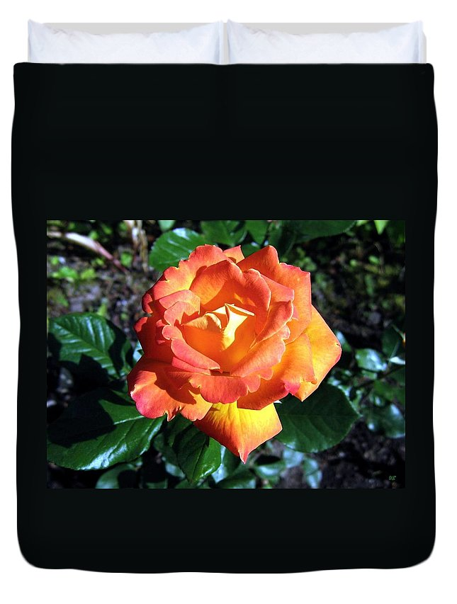 Rose Duvet Cover featuring the photograph Roses 1 by Will Borden