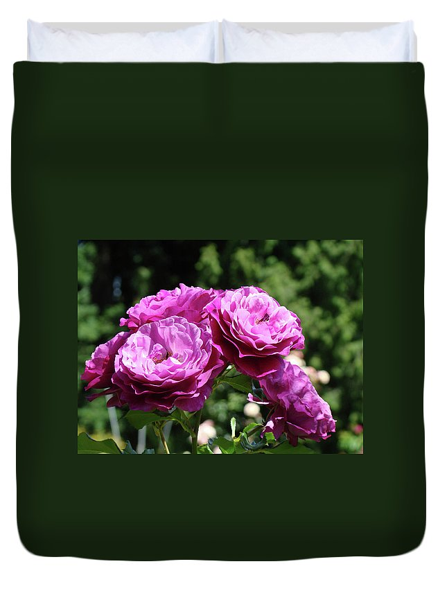 Rose Duvet Cover featuring the photograph Roses Art Rose Garden Pink Purple Floral Prints Baslee Troutman by Baslee Troutman