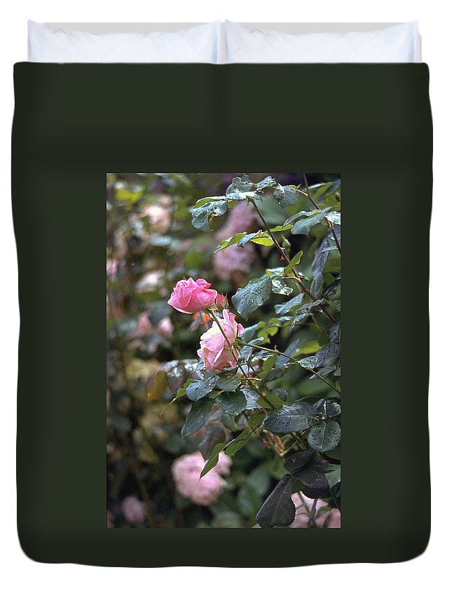 Roses Duvet Cover featuring the photograph Roses by Flavia Westerwelle