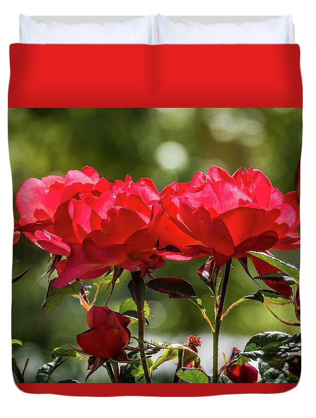 California Duvet Cover featuring the photograph Roses On A Sunny Day by Randy Herring
