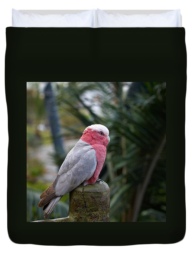 Loro Park Duvet Cover featuring the photograph Rosie by Jouko Lehto