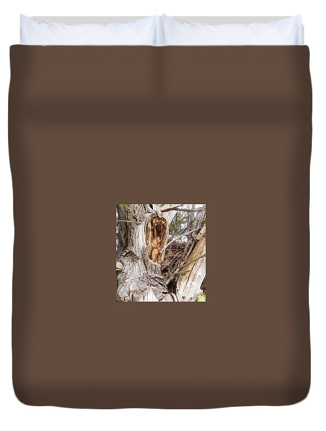 Tree Limbs Bark Duvet Cover featuring the photograph Rough Tree by Cindy New