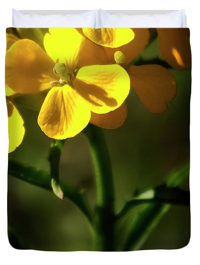 Wildflowers Duvet Cover featuring the photograph Rough Wallflower - 60618-122 by Albert Seger