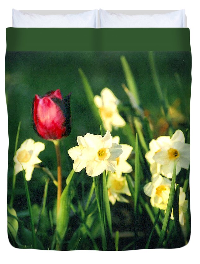 Tulips Duvet Cover featuring the photograph Royal Spring by Steve Karol
