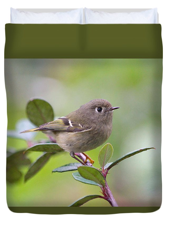 Bird Duvet Cover featuring the photograph Ruby Crowned Kinglet by Jan McCamey Hill