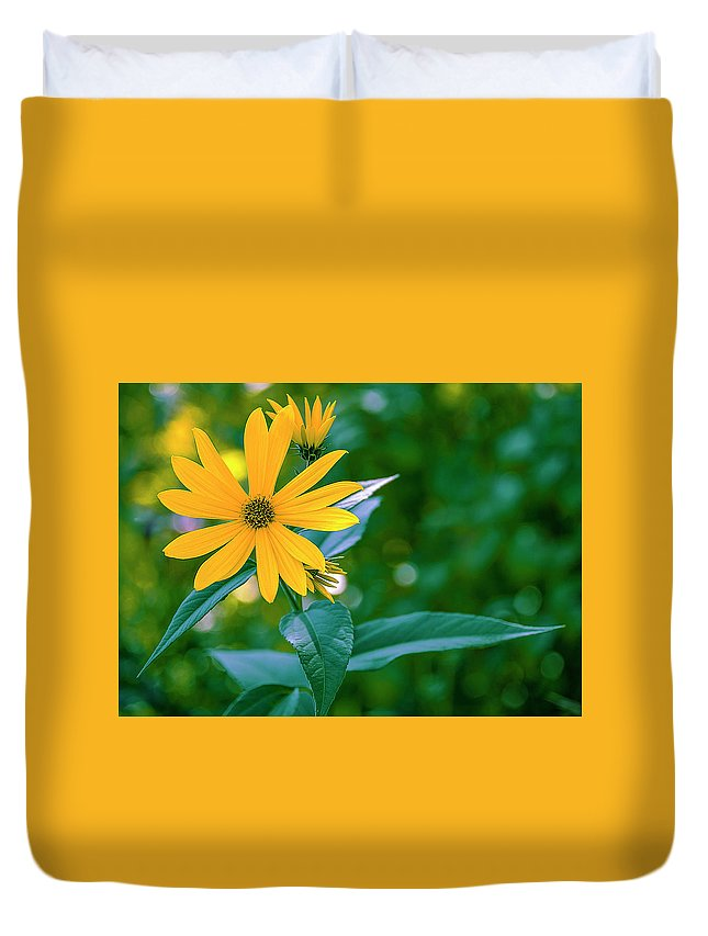 Rudbeckia Duvet Cover featuring the photograph Rudbeckia Flowers In Bloom by Tetyana Boronylo