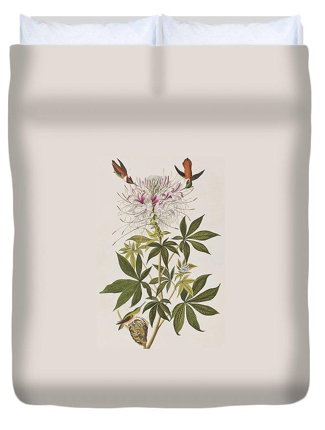 Bird Duvet Cover featuring the painting Ruff-necked Hummingbird by John James Audubon