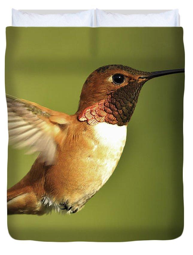 Hummingbird Duvet Cover featuring the photograph Rufous Hummingbird by Tim Hauf