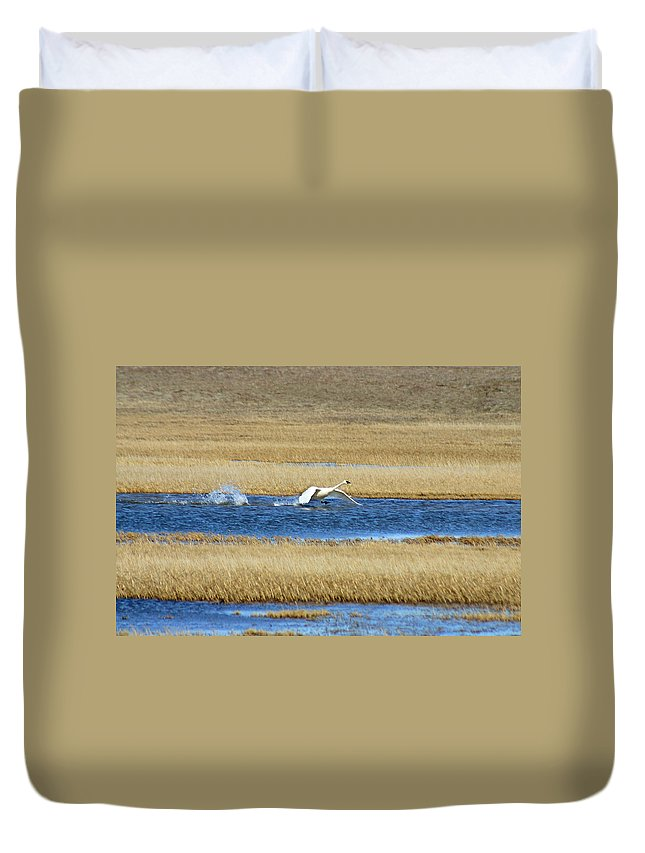 Swan Duvet Cover featuring the photograph Running On Water by Anthony Jones