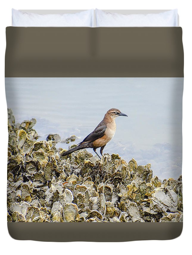 Avian Duvet Cover featuring the photograph Rusty Blackbird #6 by Tim Bond