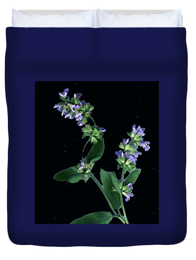 Duvet Cover featuring the photograph Sage Blossom by Wayne Potrafka