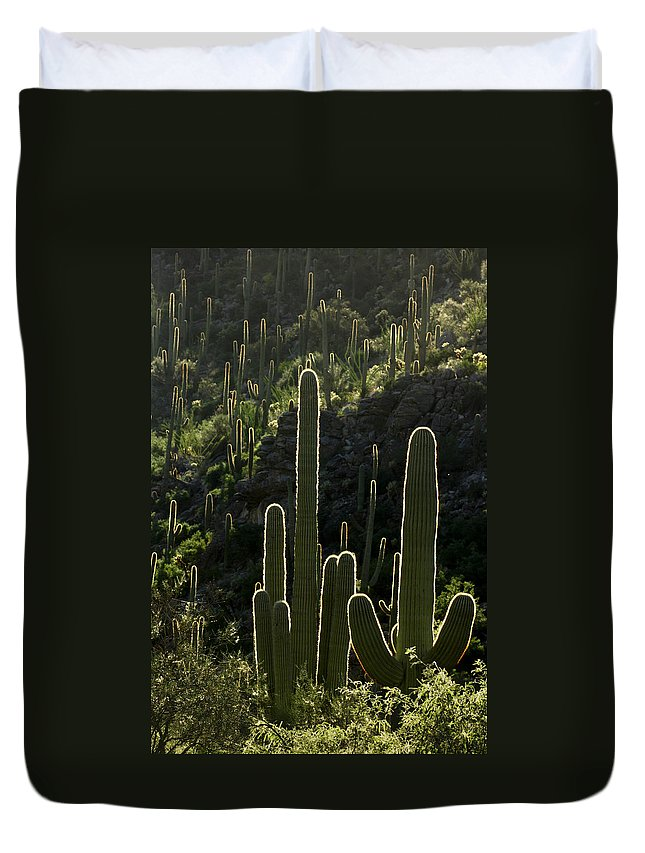 Saguaro Duvet Cover featuring the photograph Saguaro Cactus Backlit by Jill Reger