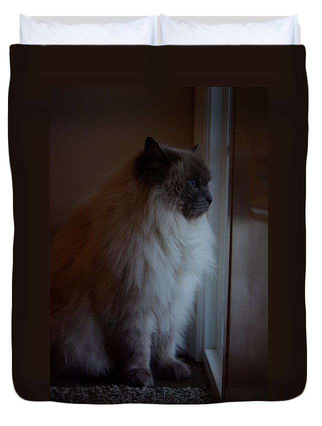 Cat Duvet Cover featuring the photograph Sam Waits by Cindy Johnston