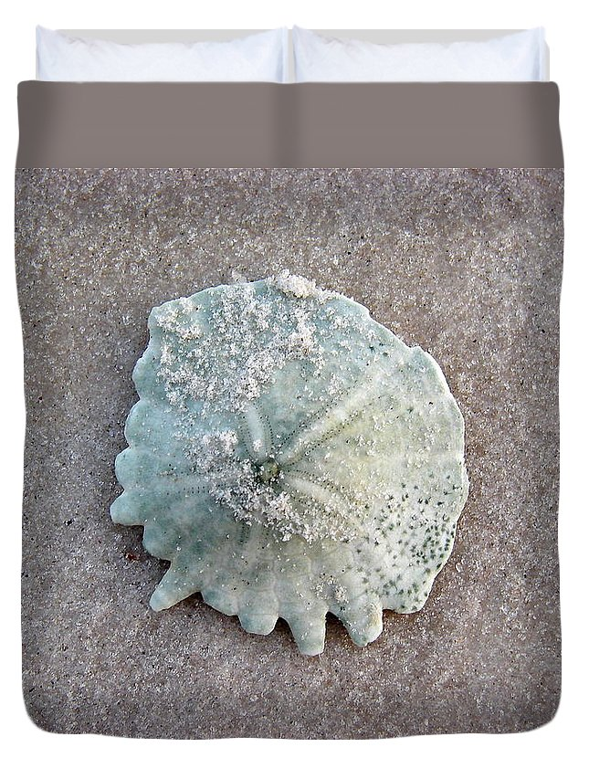 Port Gentil Duvet Cover featuring the photograph Sand Dollar by Brett Winn