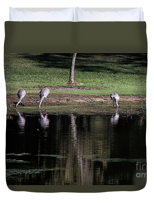 Sand Hill Cranes Duvet Cover featuring the photograph Sand Hill Cranes Dining Room by David Bearden