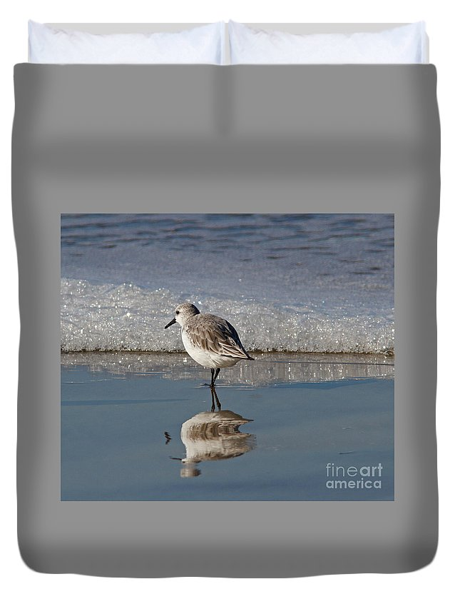 Sanderling Duvet Cover featuring the photograph Sanderling by Gary Wing