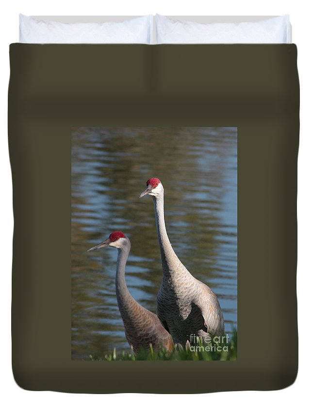 Sandhill Cranes Duvet Cover featuring the photograph Sandhill Crane Couple By The Pond by Carol Groenen