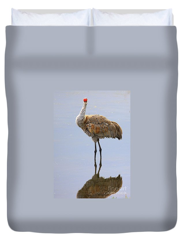 Sandhill Crane Duvet Cover featuring the photograph Sandhill Crane Posing by Carol Groenen