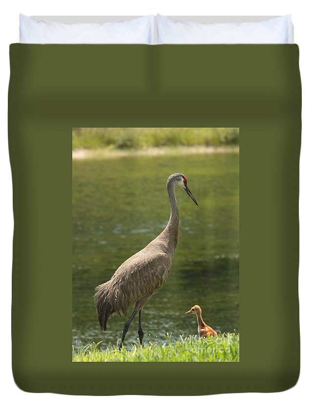 Ponds Duvet Cover featuring the photograph Sandhill Crane With Baby Chick by Carol Groenen
