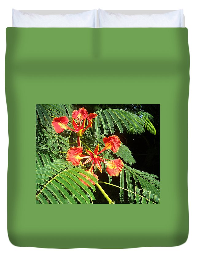 Florida Duvet Cover featuring the photograph Sanguine Serenity IIi by Chris Andruskiewicz