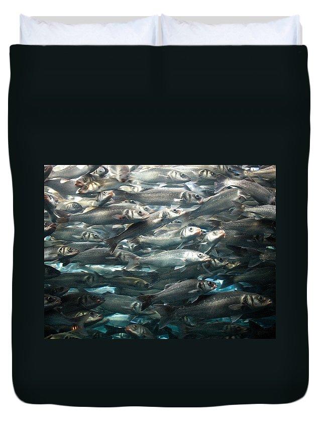 Loro Park Duvet Cover featuring the photograph Sardines 1 by Jouko Lehto