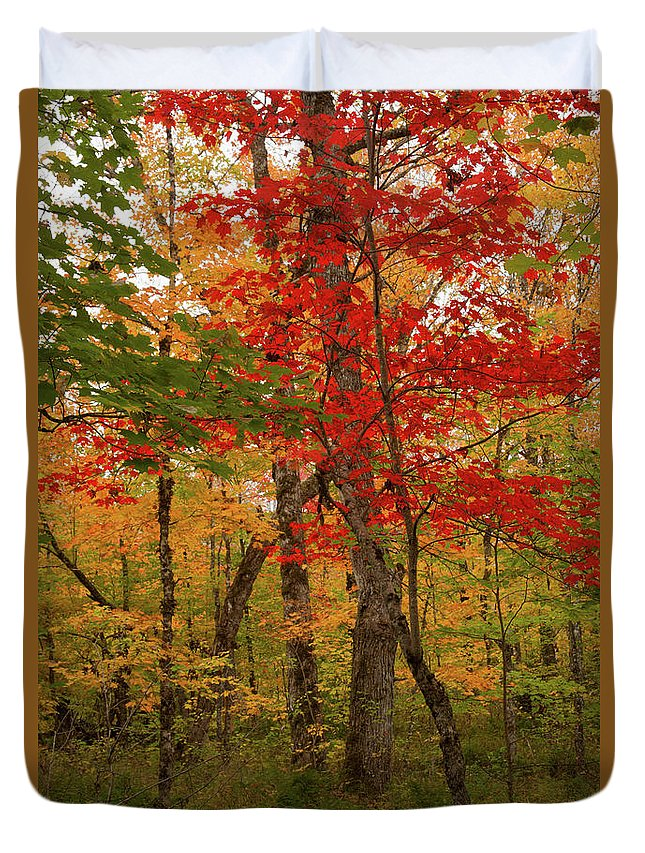 Autumn Duvet Cover featuring the photograph Scarlet Rebel #1 by Irwin Barrett