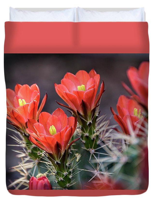 Scarlet Hedgehog Cactus Duvet Cover featuring the photograph Scarlet by Saija Lehtonen