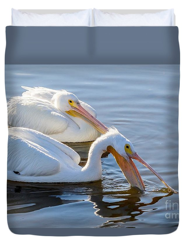 American White Pelican Duvet Cover featuring the photograph Scooping For Fish by Debra Martz