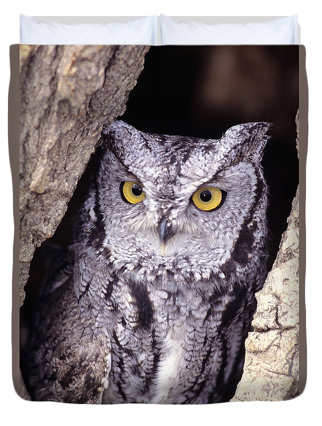 Animal Art Duvet Cover featuring the photograph Screech Owl by John Hyde - Printscapes