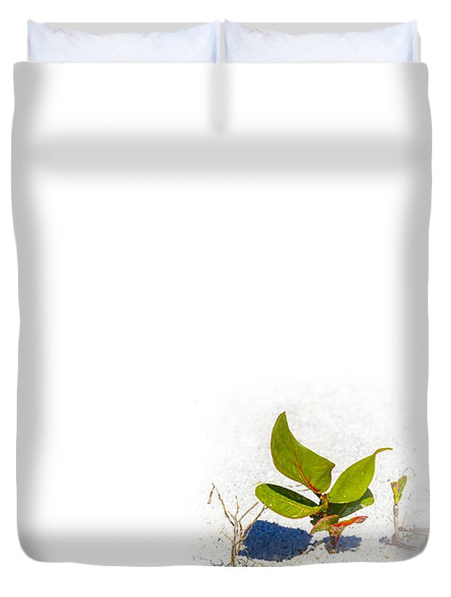 Sand Dunes Duvet Cover featuring the photograph Sea Grape by Marvin Spates