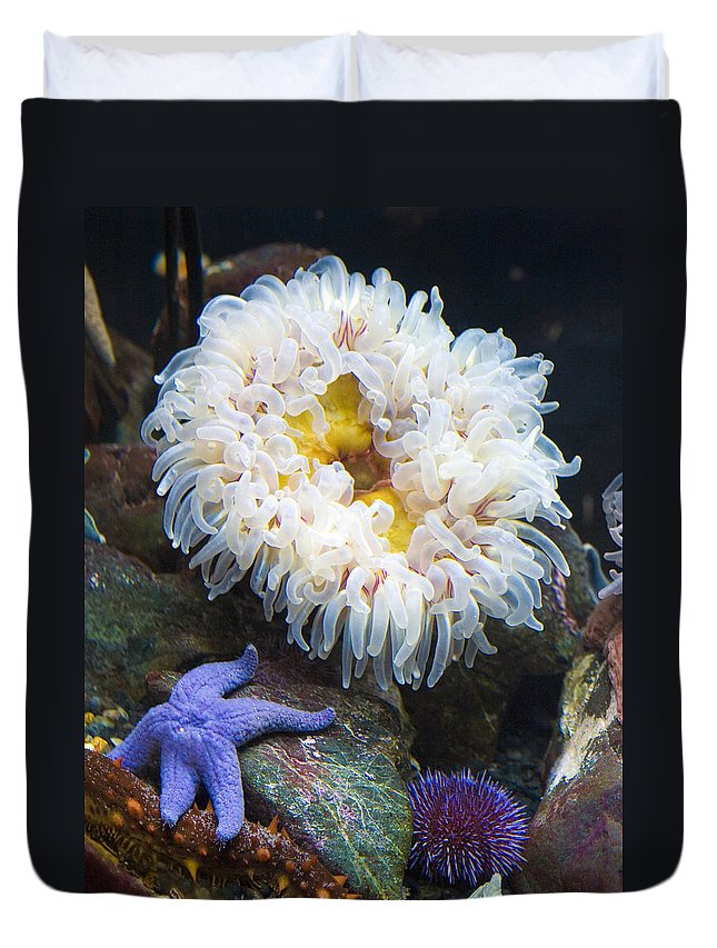 Water Duvet Cover featuring the photograph Sea Life by Marilyn Hunt