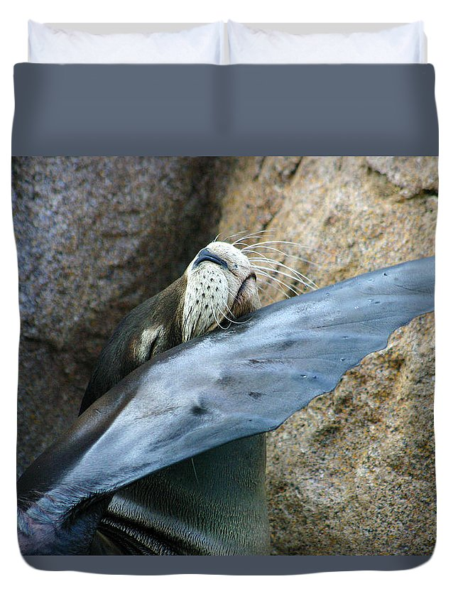 Sea Lion Duvet Cover featuring the photograph Sea Lion Itch by Anthony Jones