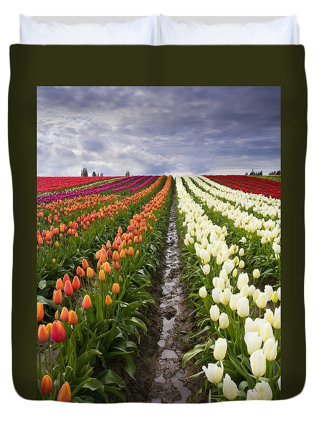 Tulips Duvet Cover featuring the photograph Sea Of Color by Mike Dawson