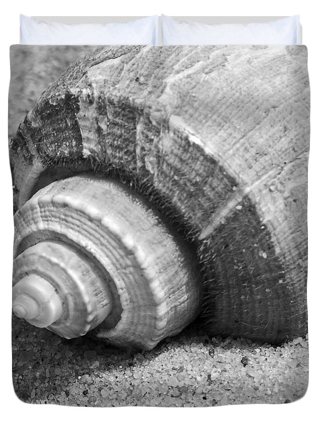 Conch Duvet Cover featuring the photograph Sea Shell by Charles Harden