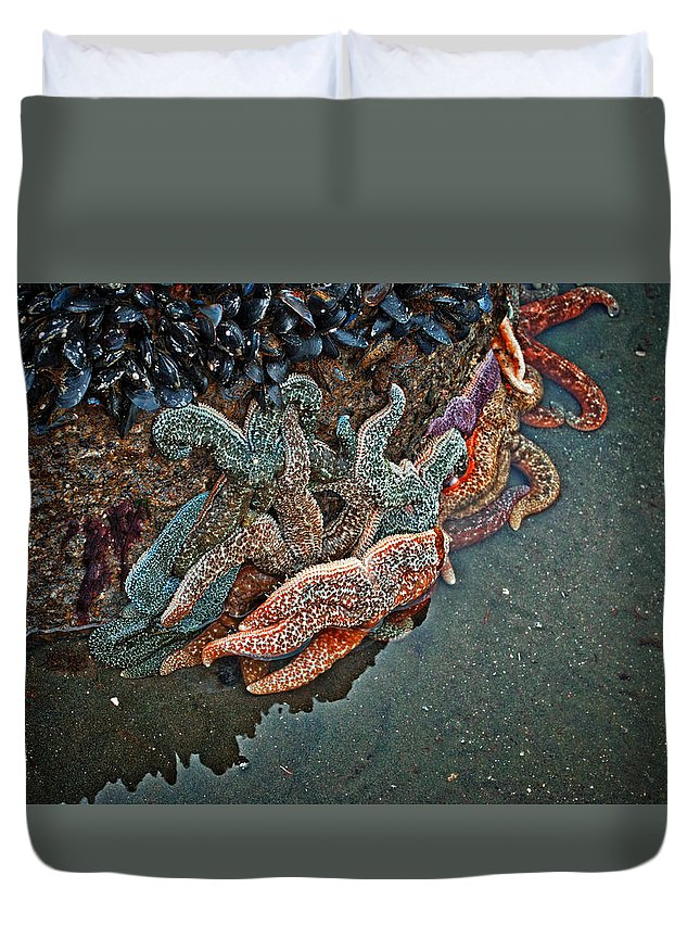 Sea Stars Duvet Cover featuring the photograph Sea Stars by Cathy Mahnke