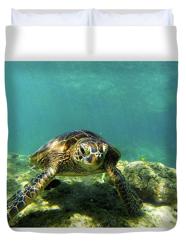 Sea Turtle Duvet Cover featuring the photograph Sea Turtle #3 by Anthony Jones