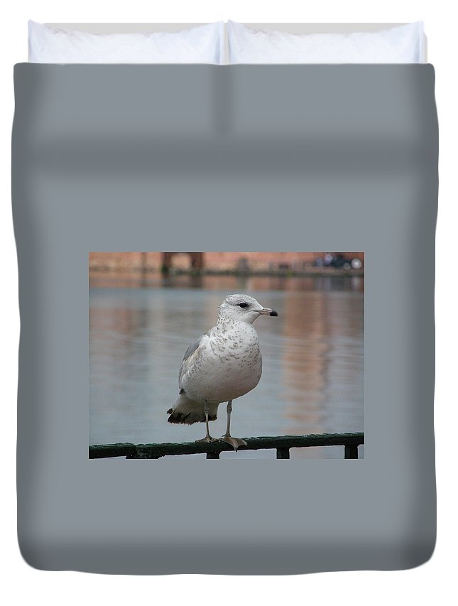 Seagull Duvet Cover featuring the photograph Seagull by Alice Markham