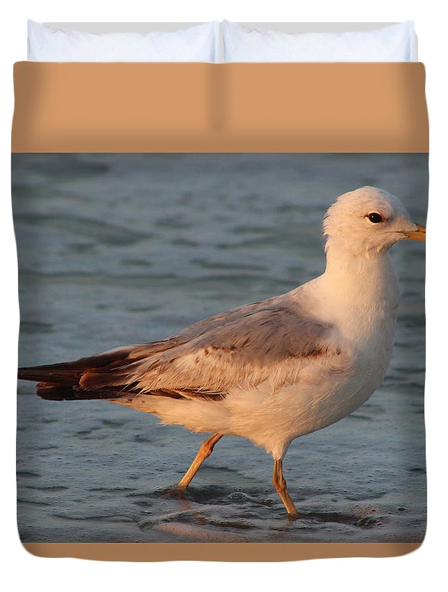 Seagull Duvet Cover featuring the photograph Seagull by Amara Dempsey